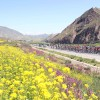 Qinghai Lake Cycling Tour