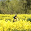 China: 2012 Yellow Mountain MTB Race